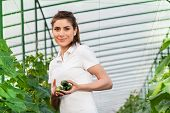 foto of cucumbers  - Happy Young woman holding and eating cucumbers in a hothouse cultivated with green fresh cucumber plants - JPG