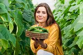 image of cucumbers  - Happy Young woman holding and eating cucumbers in a hothouse cultivated with green fresh cucumber plants - JPG