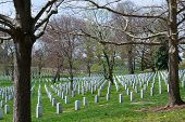 Постер, плакат: Trees At The Arlington Cemetery