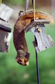 Squirrel Stealing Seeds