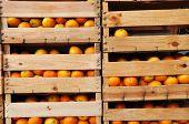 Wood Crates Full Of Orange