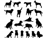 stock photo of foxhound  - Vector dog collection on a white background - JPG