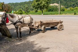 stock photo of workhorses  - A Workhorse harnessed to the cart is a typical transportation in the Romanian village - JPG