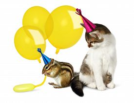 picture of chipmunks  - Birthday concept funny cat and chipmunk with balloons on white - JPG