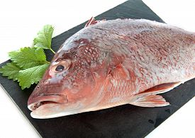 picture of red snapper  - red snapper in front of white background - JPG