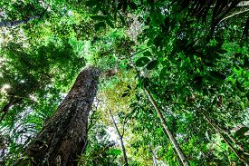 stock photo of rainforest  - The Amazon Rainforest - JPG