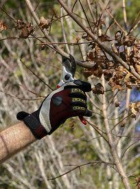 stock photo of prunes  - A man - JPG