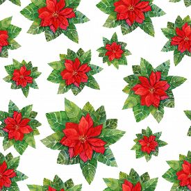 image of poinsettia  - Vintage style watercolour drawing of a bright red poinsettia  - JPG
