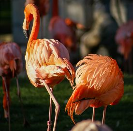 stock photo of pink flamingos  - Image of Bright pink flamingo on the green background - JPG