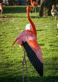 foto of pink flamingos  - Image of Bright pink flamingo on the green background - JPG