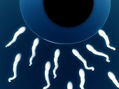 image of zygote  - An image of some sperm about to fertilize an egg - JPG