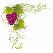 pic of grape-vine  - grape vector borders - JPG