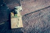 Gray Mouse Trapped poster