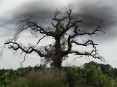 Dead Tree With Dark Clouds