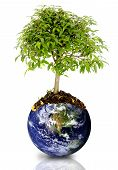 stock photo of save earth  - tree growing from the earth over a white background - JPG