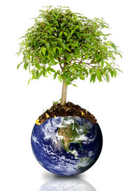 picture of save earth  - tree growing from the earth over a white background - JPG