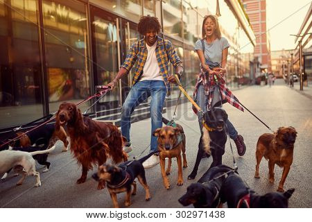 poster of Smiling girl and man dog walker with group of dogs enjoying in walk.