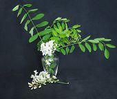 White Flower. Flower In Garden At Sunny Summer Or Spring Day. Flower For Postcard Beauty Decoration  poster