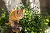 Red Kitten On A Stump On A Sunny Summer Day In The Park. In Full Growth. The Kitten Is Ready To Jump poster
