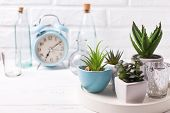 Succulents And Cactus Plants In Pots On Tray, Bottles And Blue Alarm Clock  Near By White Brick Wall poster