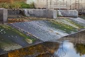 old diversion dam with irrigation ditch inlet - Cache la Poudre River in Fort Collins, Colorado, fal