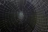 Dewy Spiders Web
