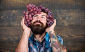 Winery Concept. Man With Beard Hold Bunch Of Grapes On Head Wooden Background. Vintner Proud Of Grap poster