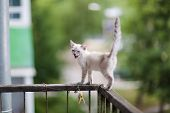 Cute Little Kitten. A Kitten On The Balcony Railing. Close-up. poster
