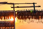 Dried Squid Hanging With Clip In A Line Against Sunset Sky. Street Food In Thailand. Delicious Dried poster
