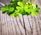 Fresh clover leaves over wooden background, green spring floral border, lucky shamrock, St.Patrick's
