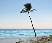 stock photo of greater antilles  - beach with single palm tree at the Dominican Republic a island of Hispanola wich is a part of the Greater Antilles archipelago in the Carribean region - JPG