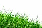 Grass Over White