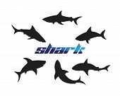 Shark Logo Template And Design Vector Fish Wild Sea Animal poster