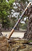 stock photo of didgeridoo  - Didgeridoo indigenous Australian musical wind instruments leans casually against fallen tree stump - JPG