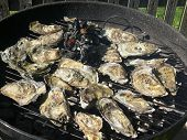 oysters in shell on barbecue