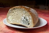 Mildew Bread