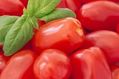 image of plum tomato  - A close up shot of whole baby plum tomatoes with a sprig of basil in the top left hand corner - JPG