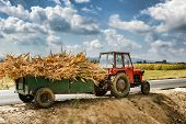 picture of corn stalk  - Tractor laden with dry stalks of corn  - JPG