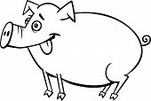 Farm Pig Cartoon For Coloring