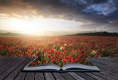 Creative Concept Pages Of Book Stunning Poppy Field Landscape Under Summer Sunset Sky