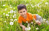 Little Boy In Dandelions