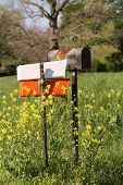 foto of ragweed  - Country roadside mailbox with wildflowers and dogwood tree in the background - JPG
