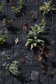 Closeup Part Of Herbs Wall