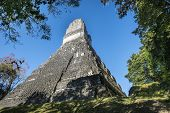 Ruins Of The Temple At Tikal, Guatemala