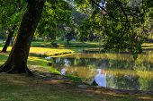 foto of duck pond  - trees in the morning sun near a pond in city park - JPG