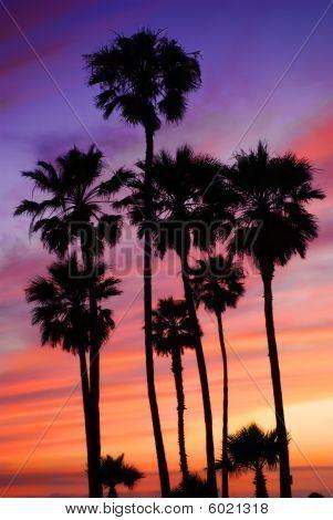 Palm trees under setting sun