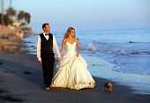 Wedding couple walking on the beach with their dog