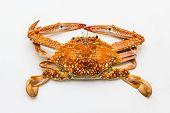 Flower Crab Or Blue Crab Isolated On White Background.