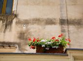 stock photo of planters  - A planter box on an old plaster wall with red and white flowers - JPG