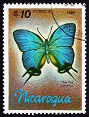 Postage Stamp Nicaragua 1986 Theritas Coronata, Butterfly